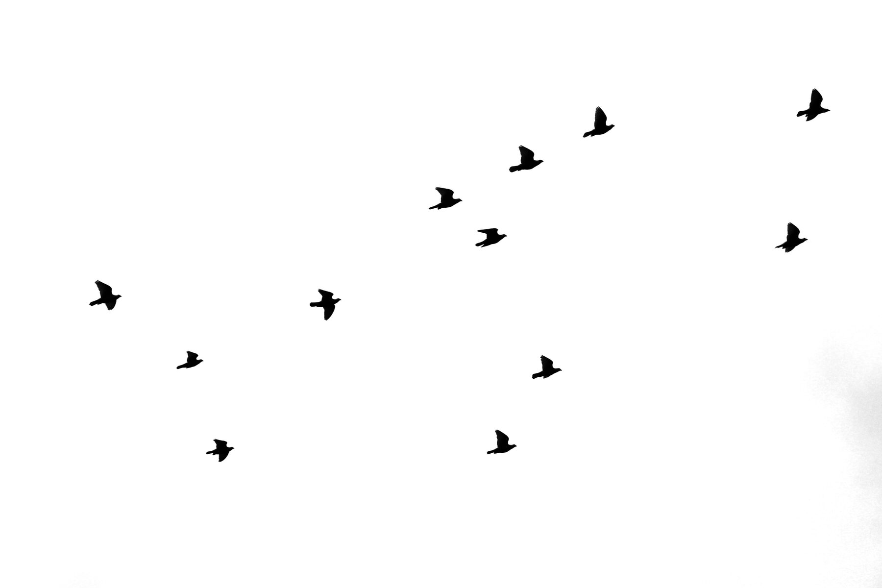 oiseaux-envol-dans-la-joie